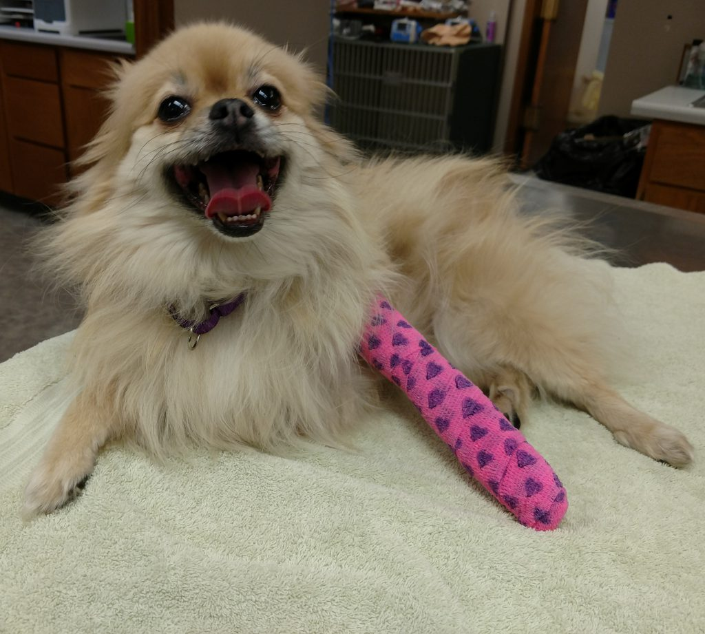 Dog with pink cast